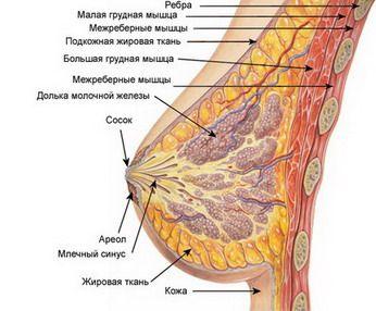 Стоит ли делать операция по увеличению груди
