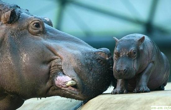 hippo4.jpg