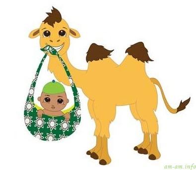 Верблюд с малышом в слинге