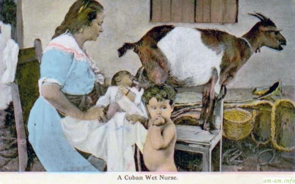 Докорм ребенка кормилицей молоком козы прямо из вымени