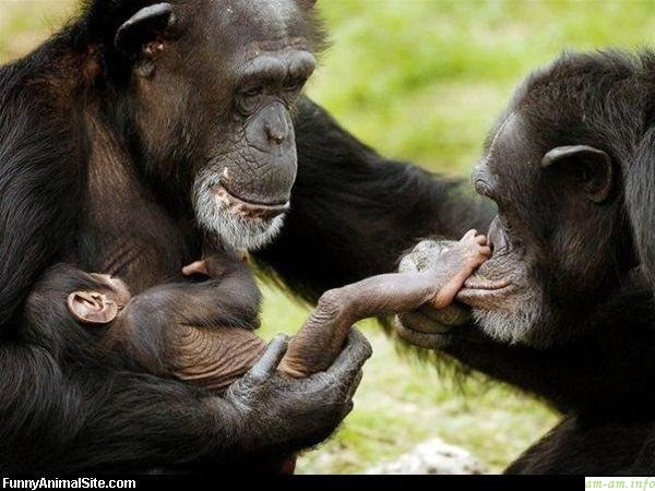 Как кормит грудью обезьяна - с новым годом