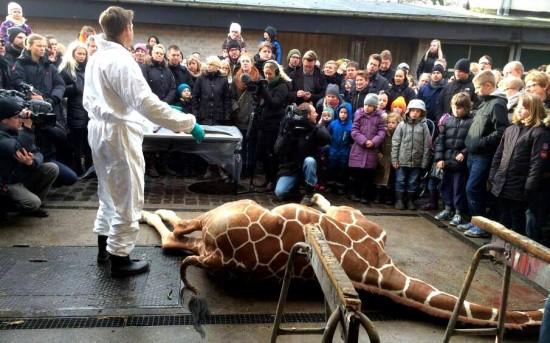 Казнь жирафа в Копенгагене