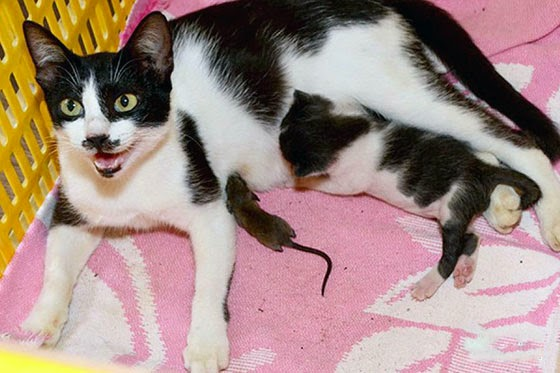 кошка кормит мышку грудью молоком