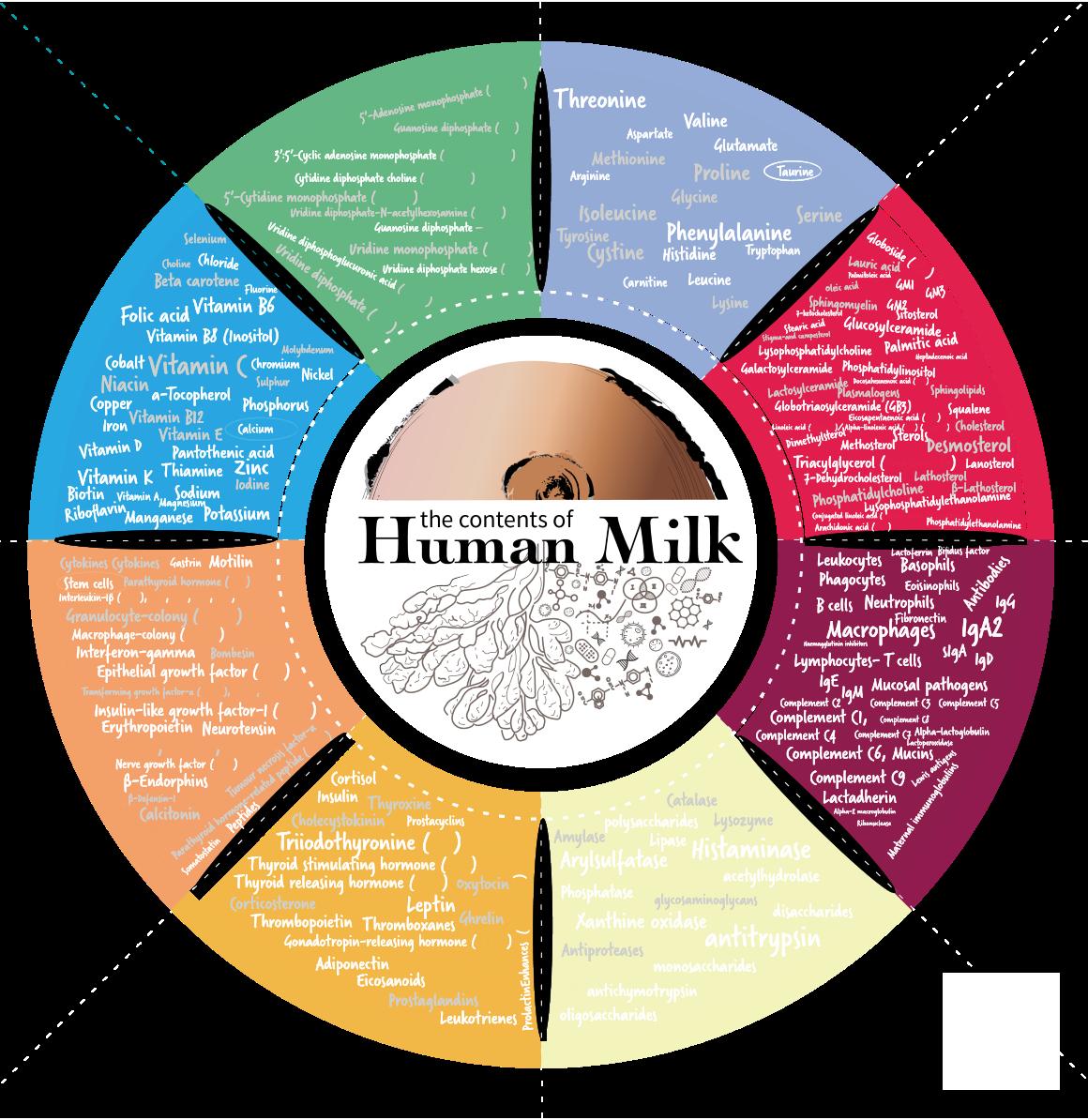 Эволюция грудного молока